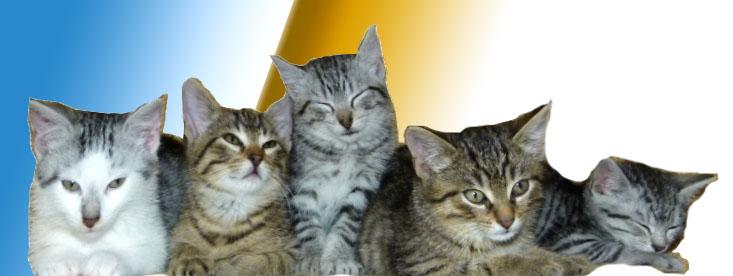 Katzenreich e.V.