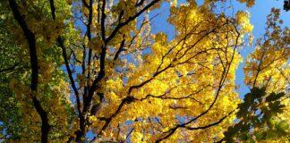 Herbstgold im Gail'schen Park